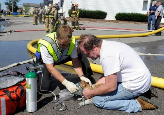 These two fireman give oxygen to a cat they rescued from a fire.