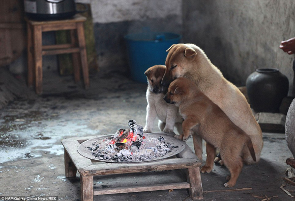 puppies-around-fire