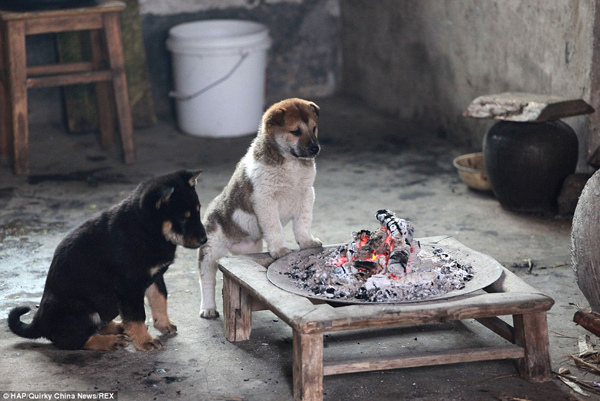 puppies-around-fire3