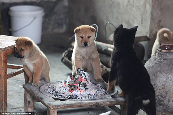 puppies-around-fire4