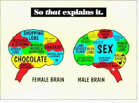 gender-brains