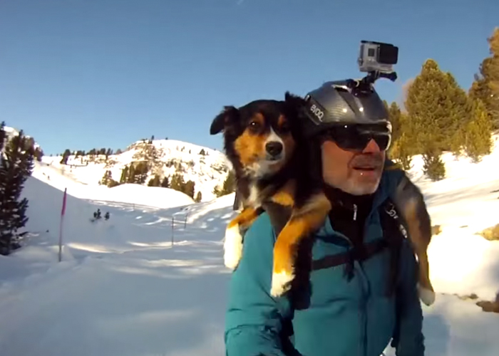 skidog